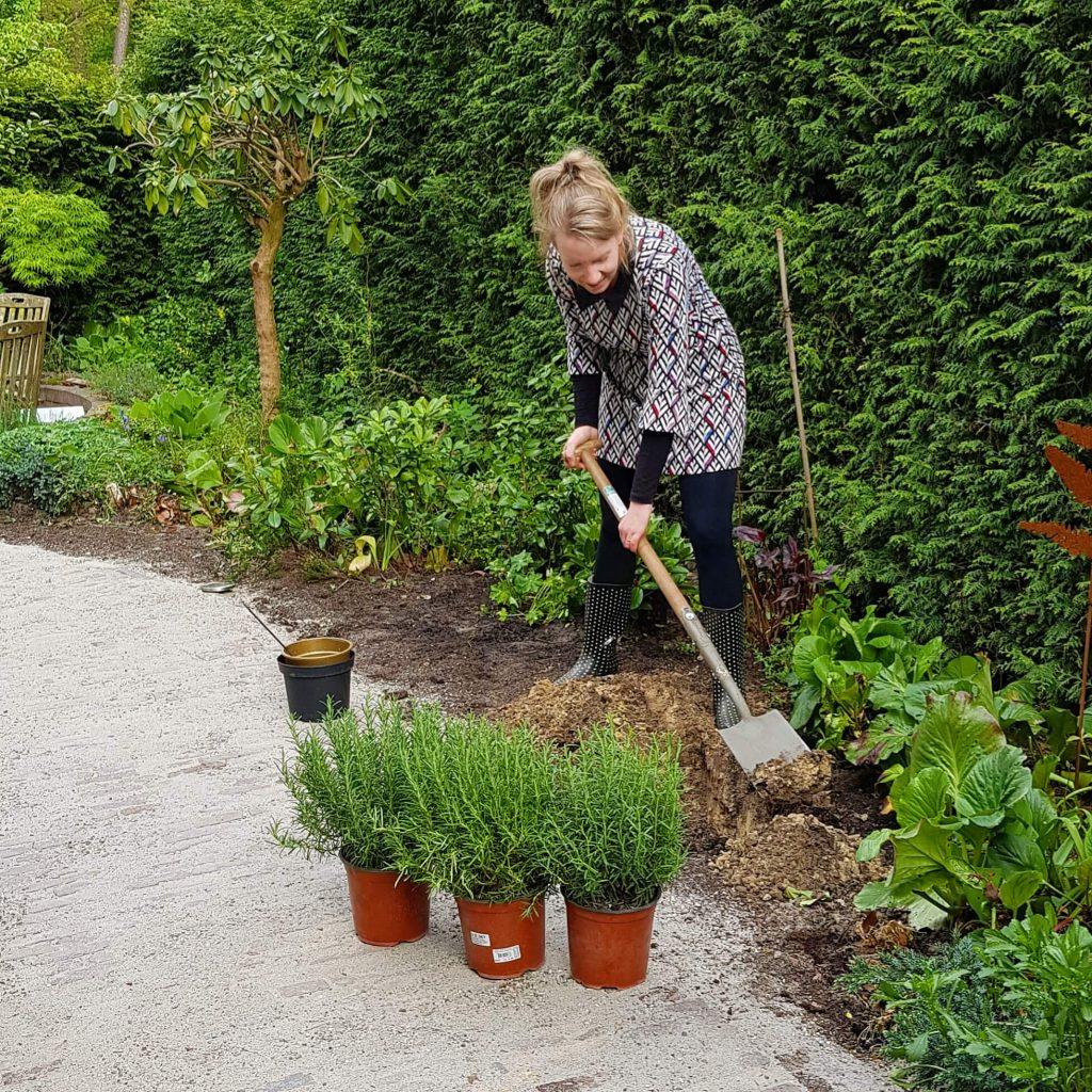 Marjoleins Creations plant Rozemarijn als symbool voor vriendschap en trouw langs rolstoeltoegankelijk tuinpad